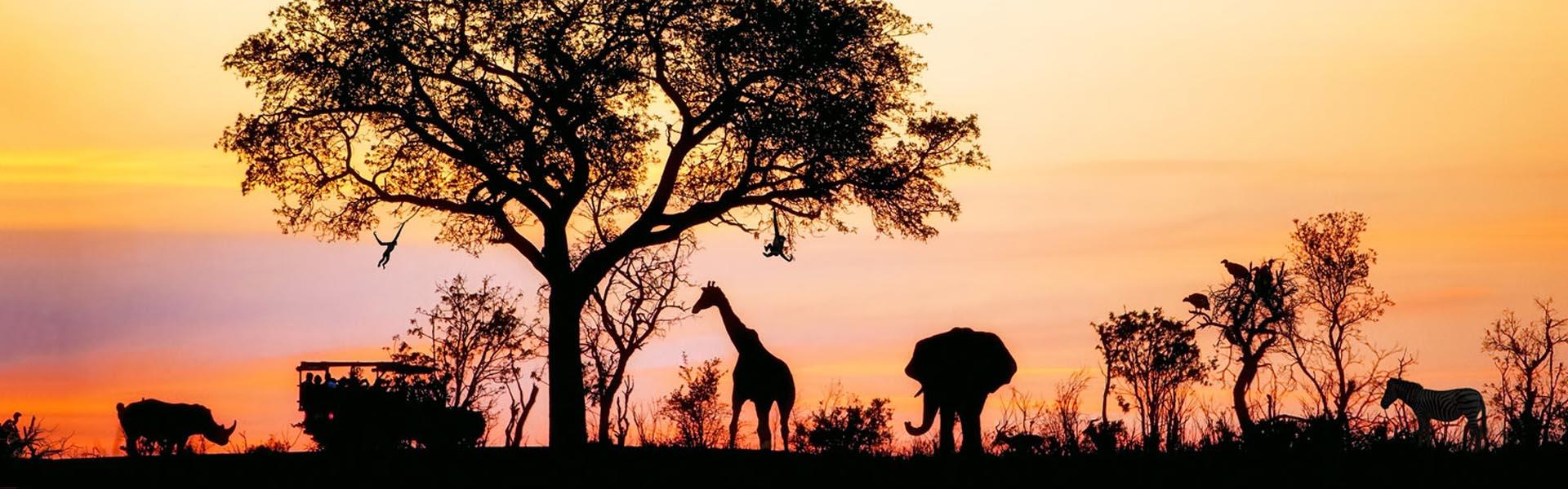 Safari in het Kruger Park bij zonsondergang