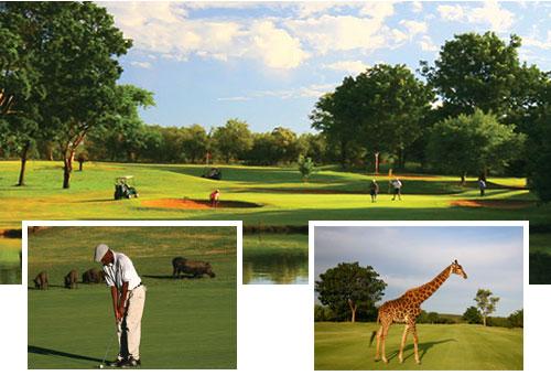 Overzicht golfbaan Hans Merensky Golfbaan Zuid Afrika