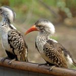 Vogels in het Krugerpark